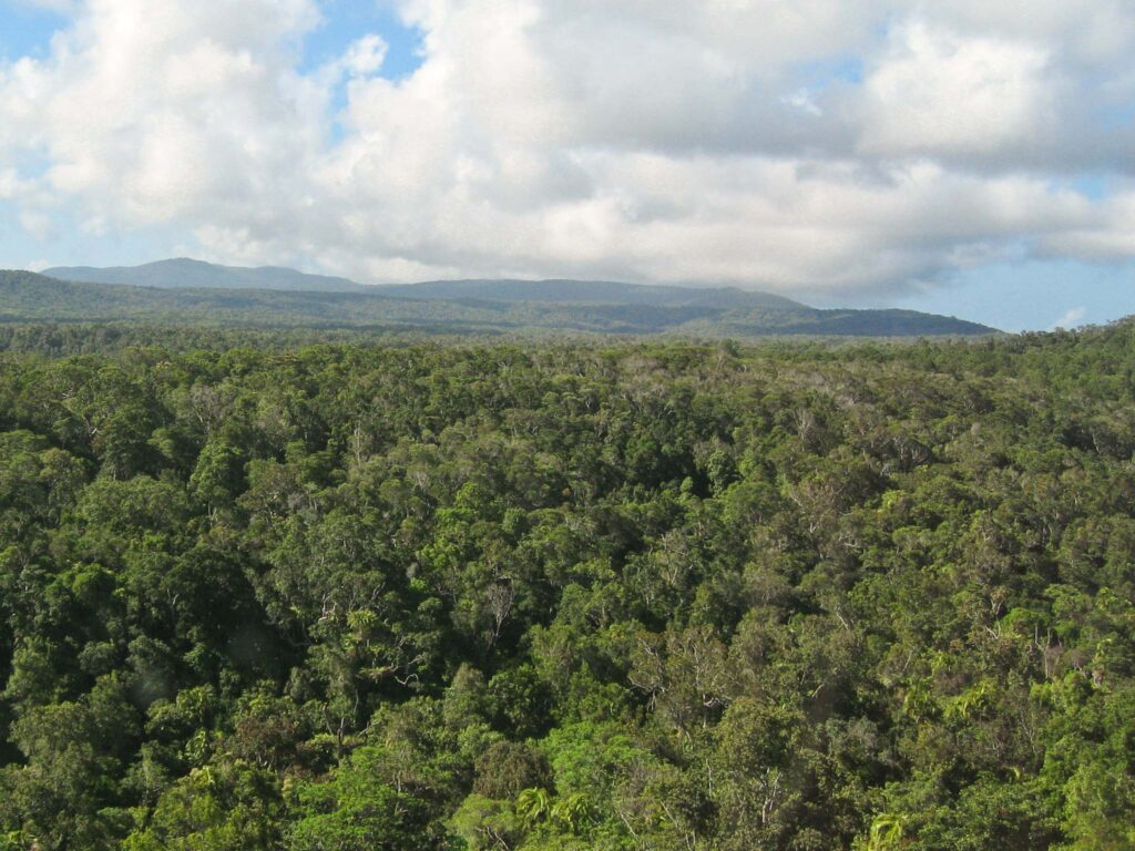 Australian Rainforest (turn on images in your browswer to see this)
