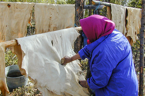 Woman with headscarf working deer skins